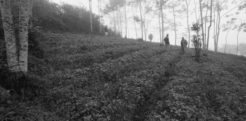 Horor di Takokak (2): Kisah dari Ladang Pembantaian