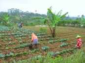 Revolusi di Ladang Sayur